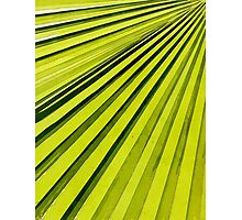 Green Palm Frond Photographic Print