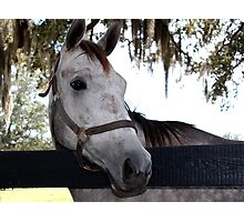 Did you bring carrots or just a camera? Photographic Print