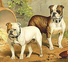 Vintage Painting of English Bulldogs by BravuraMedia