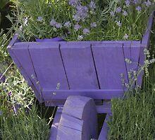 wheelbarrow with lavender by spetenfia