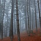 Lonely bench - Florina by Hercules Milas