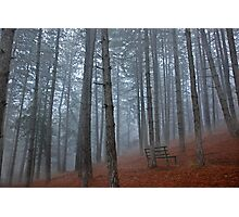 Lonely bench - Florina Photographic Print