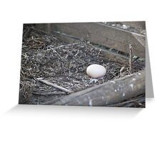 chicken eggs Greeting Card
