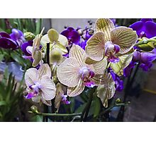 orchid in the garden Photographic Print