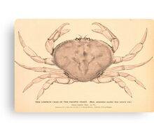 The Common Crab of the Pacific Coast Canvas Print