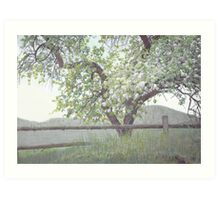 Apple Blossoms in the Spring Art Print