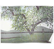 Apple Blossoms in the Spring Poster