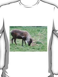 Caribou with Large Antlers T-Shirt