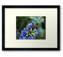 Bee on the flower photography Framed Print