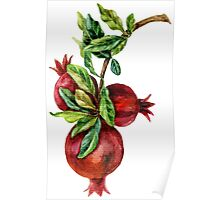 Pomegranate Branch Poster