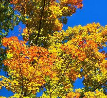 Colorful Fall Trees by Christina Rollo