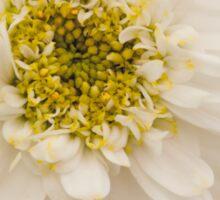 White Mini Chrysanthemum Macro Sticker
