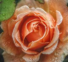 Raindrops on Roses by Christine Lake