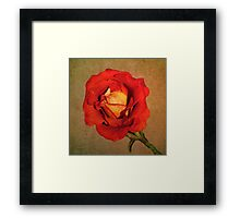 Parchment Flame Framed Print
