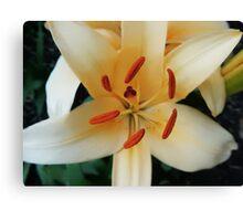 Geometric Flower Fine Art Photography Canvas Print