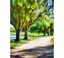 Trees next to the Path Photographic Print