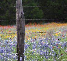 Texas Wild Flowers by suzyrissew