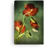 Red Poppies Impression Canvas Print