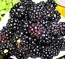 Home Grown Blackberries by lezvee