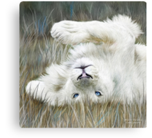 White Lion - Wild In The Grass - Sq Canvas Print