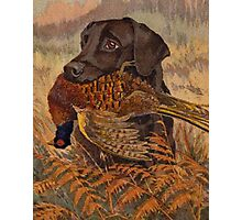 Vintage Chocolate Lab Hunting  Photographic Print