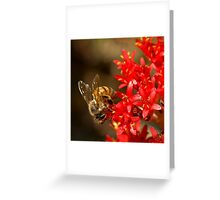 Bee on scarlet paintbrush Greeting Card