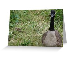 He thinks I can't see him. Huh I can. Greeting Card