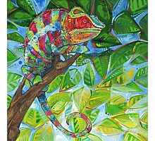 Panther chameleon Photographic Print