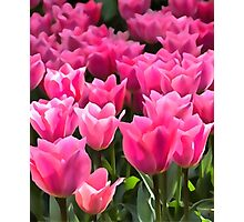 No Spanking The Monkey©WEAR Pink Tulips  Photographic Print