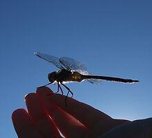 The Reluctant Dragonfly by Muninn