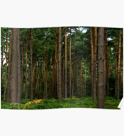 Green Forest Nature Scene Poster