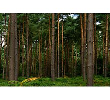 Green Forest Nature Scene Photographic Print