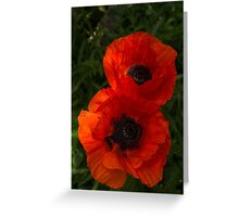 Hot Red Poppy Duet - a Vertical View Greeting Card