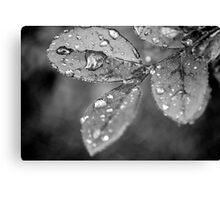 Rain Droplets Canvas Print