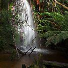 Rainforest Splashpool by TonyCrehan
