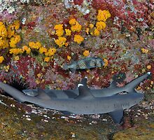 Man-shark Cave by terry goss