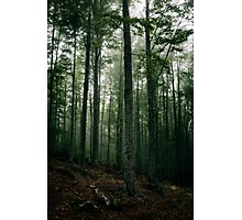 Mysterious dark forest in fog Photographic Print