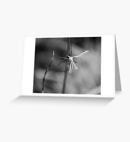 Crane fly Greeting Card