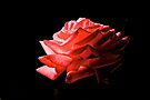 Red Rose by Candlelight by John Butler