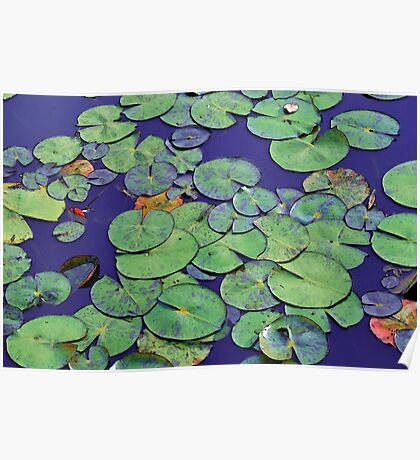 Tranquil waterlily pond Poster