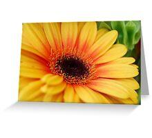 yellow gerbera daisy Greeting Card