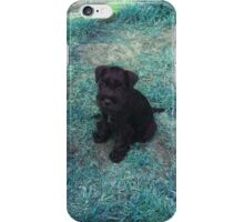 Schnauzer Puppy iPhone Case/Skin