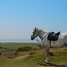 Horse on Poorton Hill, Dorset, UK by Pauline Tims
