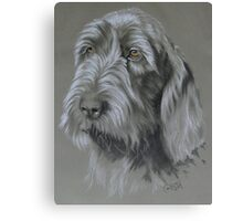 Spinone Italiano Canvas Print