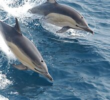 Common Dolphin by BravuraMedia