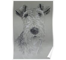 Wire-haired Fox Terrier Poster