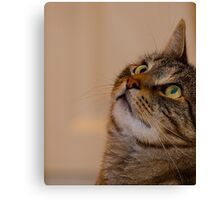 Jimmy Cat, Watchful. Canvas Print