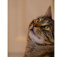 Jimmy Cat, Watchful. Photographic Print