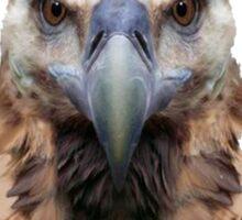 Badass Griffon Vulture (Bird) Sticker
