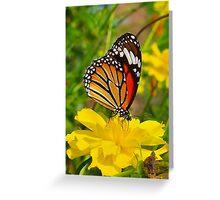 Common Tiger (Danaus genutia) Greeting Card
